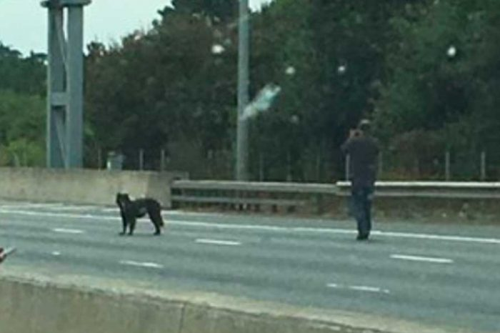 Man spotted walking his dog on the M25 during huge traffic jam
